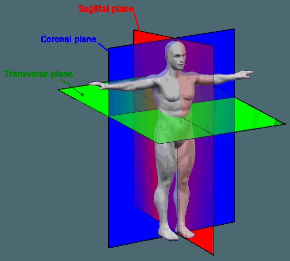anatomy-planes-frontal-transverse-sagittal