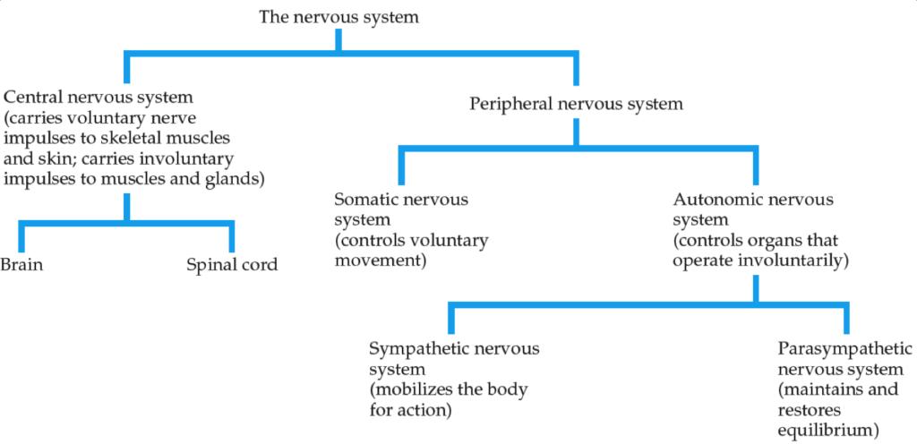 nervous-system-tree